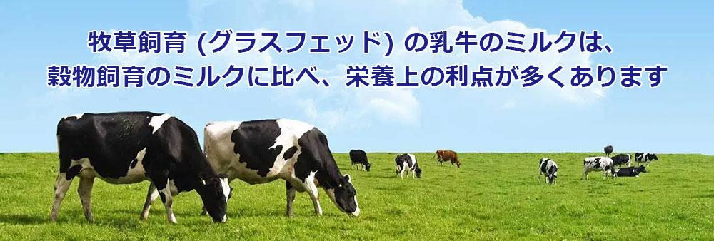 牧草飼育 (グラスフェッド) の乳牛のミルクは、穀物飼育のミルクに比べ、栄養上の利点が多くあります
